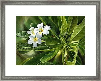 Plumeria Leaves Framed Print by Sharon Freeman