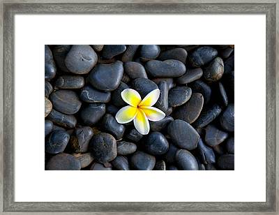 Plumeria Pebbles Framed Print by Sean Davey