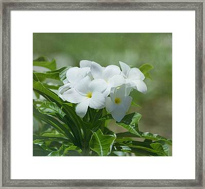 Plumeria - Tropical Flowers Framed Print by Kim Hojnacki