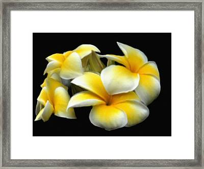 Plumeria Yellow And White Framed Print by Dennis Buckman