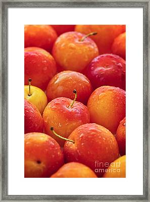 Plums  Framed Print by Elena Elisseeva