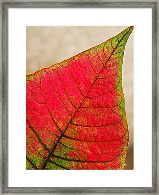 Poinsettia Leaf  Framed Print by Chris Berry