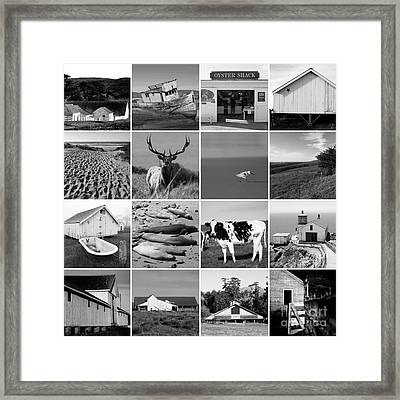 Point Reyes National Seashore 20150102 Black And White Framed Print by Wingsdomain Art and Photography