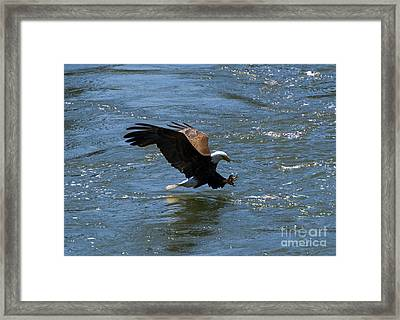 Poised To Catch Framed Print by Mike  Dawson