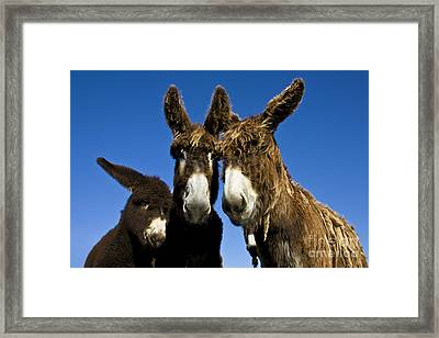 Poitou Donkey Family Framed Print by Jean-Louis Klein and Marie-Luce Hubert