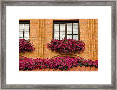 Poland, Gdansk Window Boxes With Purple Framed Print by Jaynes Gallery