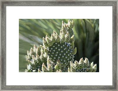 Polka Dot Prickly Pear Cactus Framed Print by Richard & Ellen Thane