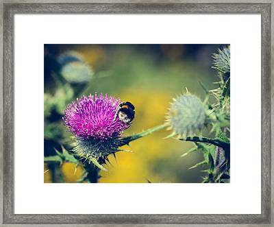 Pollination Agent IIi Framed Print by Marco Oliveira