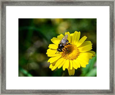 Pollination Agent Framed Print by Marco Oliveira