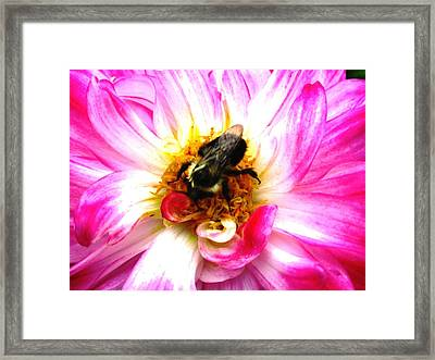Pollination Nation 2 Framed Print by Will Boutin Photos
