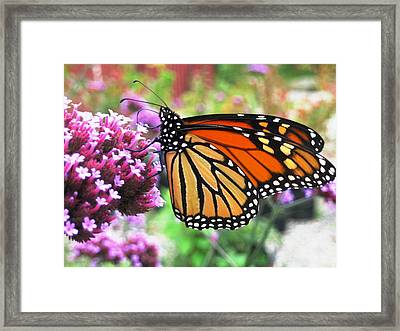 Pollination Nation 3 Framed Print by Will Boutin Photos