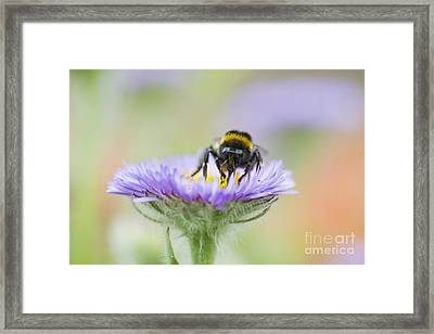 Pollinator  Framed Print by Tim Gainey