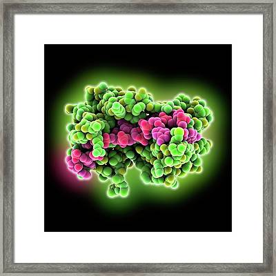 Polya-binding Protein And Rna Complex Framed Print by Laguna Design