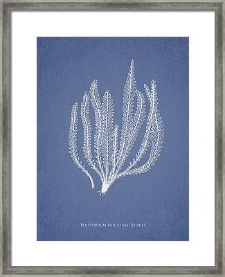 Polypodium Fuscatum Framed Print by Aged Pixel