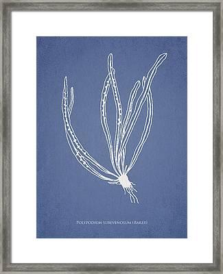 Polypodium Subevenosum Framed Print by Aged Pixel
