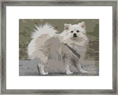 Pomeranian Dog Framed Print by Jivko Nakev