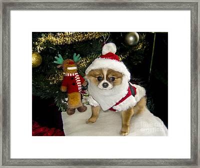 Pomeranian Santa Framed Print by Gary Keesler