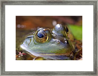 Pond Celebrity Framed Print by Juergen Roth