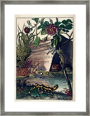 Pond Life Framed Print by British Library
