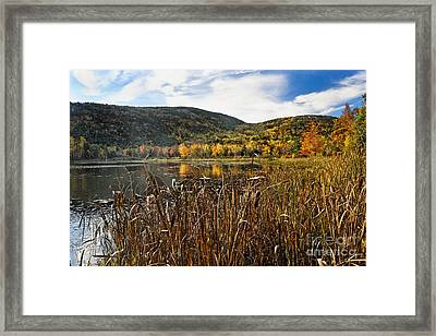 Pond With Autumn Foliage  Framed Print by George Oze