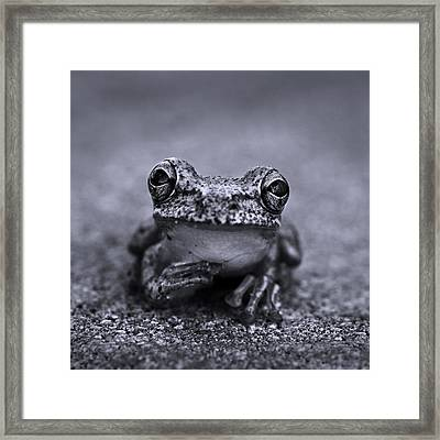 Pondering Frog Bw Framed Print by Laura Fasulo