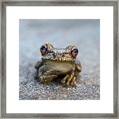 Pondering Frog Framed Print by Laura Fasulo