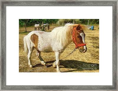 Ponies On The Farm Framed Print by Odon Czintos