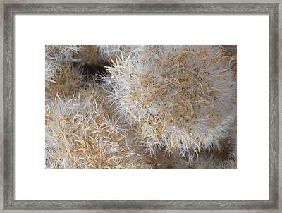 Poof Framed Print by Brent Dolliver