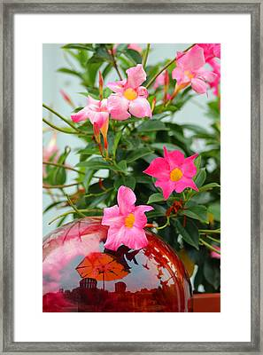 Pool Side Flowers Framed Print by Lorna Rogers Photography