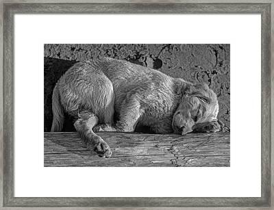 Pooped Puppy Bw Framed Print by Steve Harrington