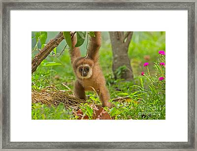 Poor Little Gollum Framed Print by Ashley Vincent