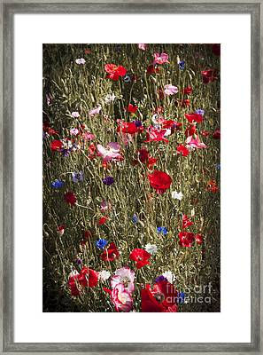 Poppies In Garden Framed Print by Elena Elisseeva