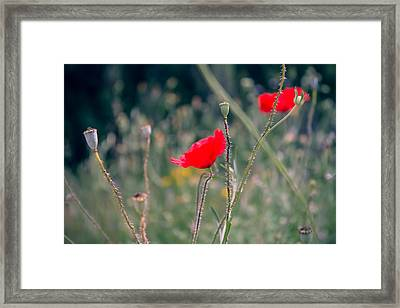 Poppies Framed Print by Jane M