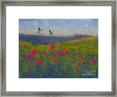 Poppies Of Tuscany Framed Print by Lianne Schneider