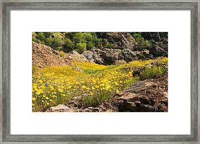 Poppies On The Stanislaus River Framed Print by Matt Tilghman