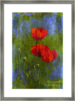 Poppies Framed Print by Veikko Suikkanen