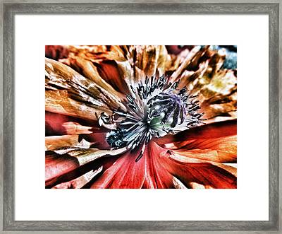 Poppy And The Bee Framed Print by Marianna Mills
