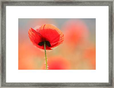Poppy Dream Framed Print by Roeselien Raimond