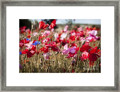 Poppy Field Framed Print by Elena Elisseeva