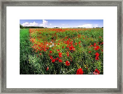 Poppy Field Framed Print by Robert Lacy