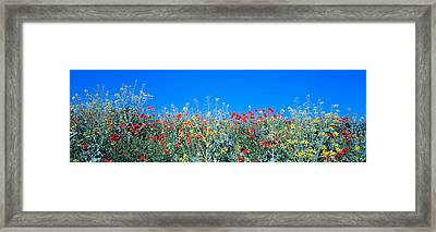 Poppy Field Tableland N Germany Framed Print by Panoramic Images
