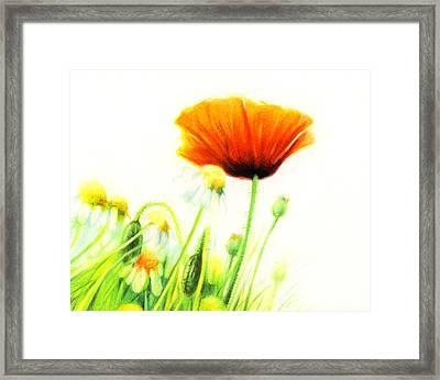 Poppy Flower Framed Print by Natasha Denger