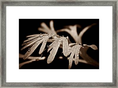 Poppy Foliage Framed Print by Chris Berry