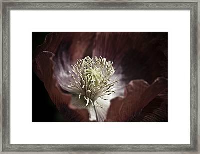 Poppy Framed Print by Frank Tschakert