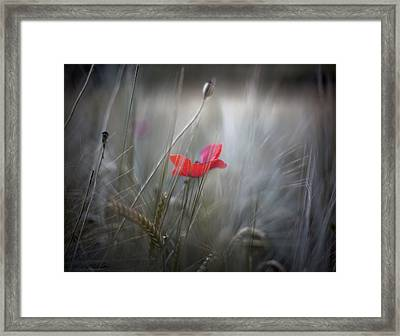 poppy IV Framed Print by Renata Vogl