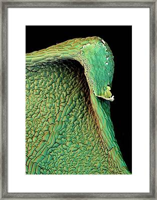 Poppy Leaf Framed Print by Stefan Diller