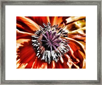 Poppy - Macro Fine Art Photography Framed Print by Marianna Mills