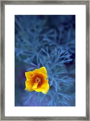 Poppy Framed Print by Sarah Bergan