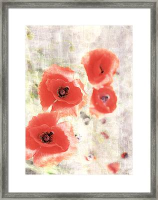Poppy Three Framed Print by JC Photography and Art
