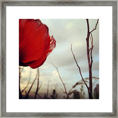poppy V Framed Print by Renata Vogl